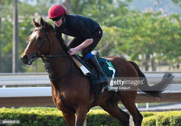 Highland Reel from Team Ballydoyle during a Longines Hong Kong International Trackwork Session at Sha Tin racecourse on December 6 2017 in Hong Kong...