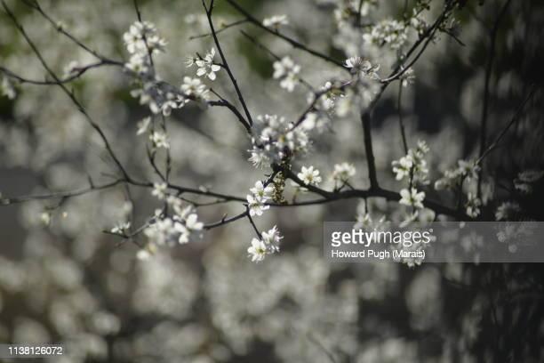 Highlighted Springtime Trees And Cherry Blossom