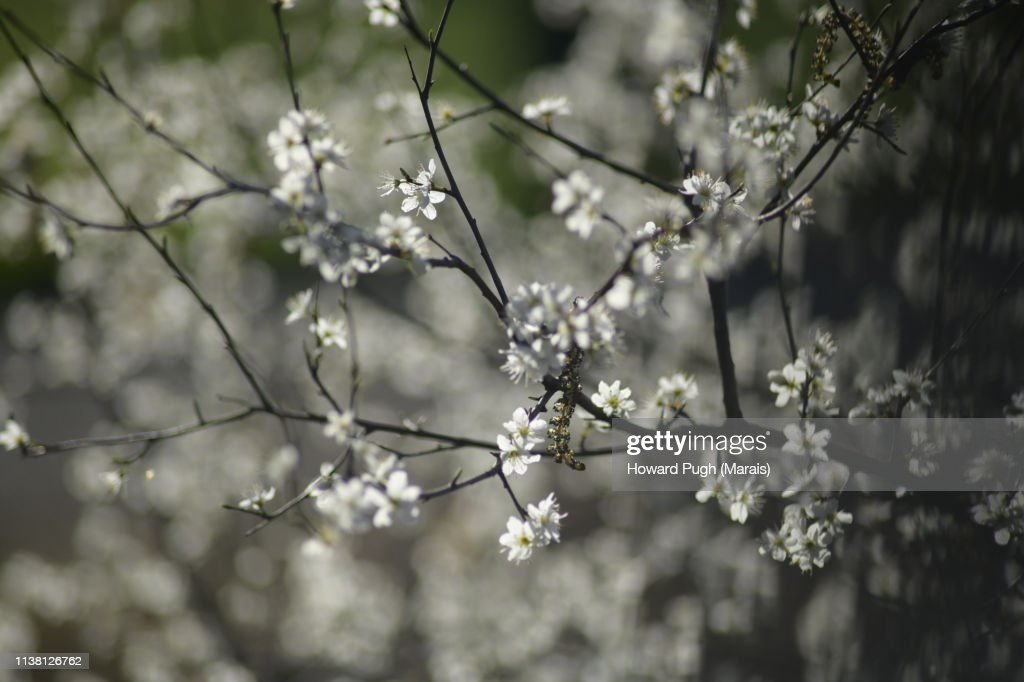 Highlighted Springtime Trees And Cherry Blossom : Stock-Foto