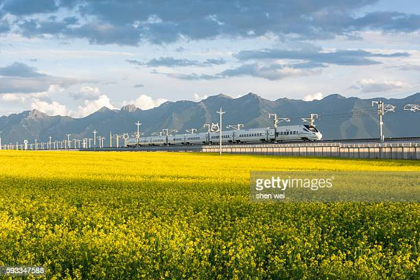 High-speed train crossing over from canola flower field
