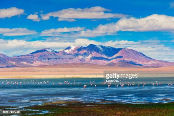 montanhas de alto reserva - avião de andes - altiplano andino - lago salgado de tara reserva - salar de tara - refúgio flamingo - chile - fotografias e filmes do acervo