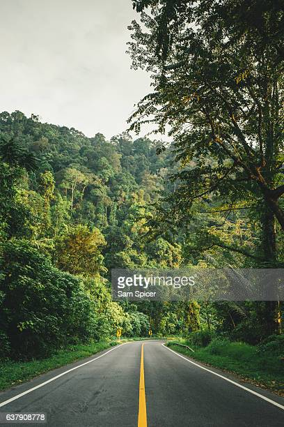 Highway surrounded by lush rainforest, road trip!