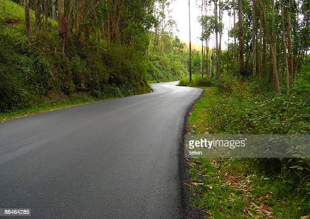 Highway through forest