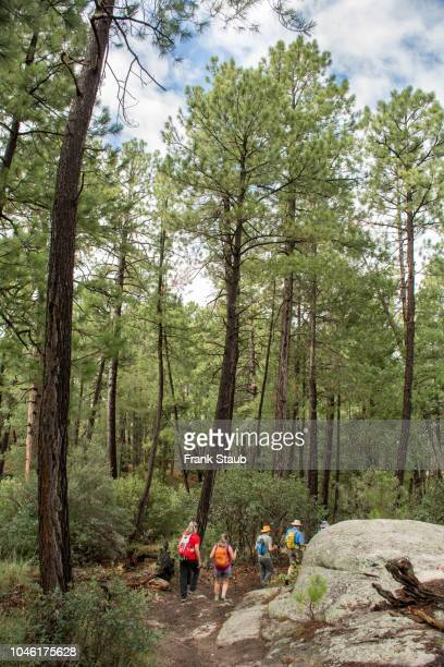 hiing on mt lemon - mt lemmon stock photos and pictures