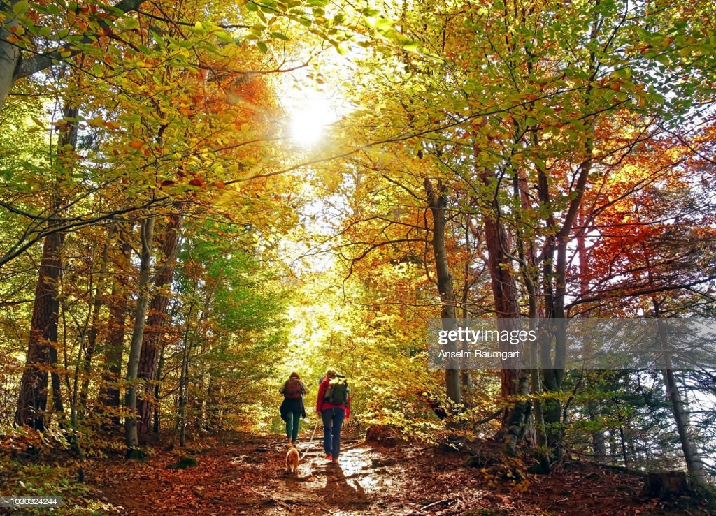 hike in the autumn forest : Stock Photo