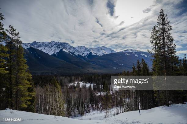 hike in the winter woods in the rocky mountains - kananaskis country stock pictures, royalty-free photos & images