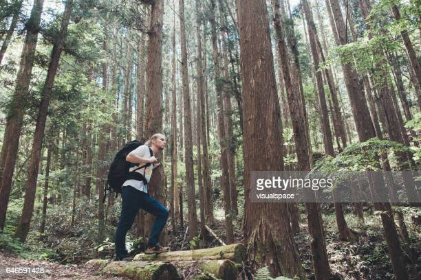 Hiker amongst Great Big Trees of Nakasendo Trail