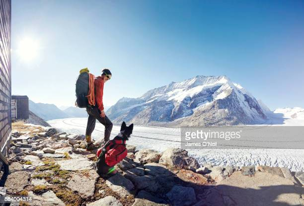 hiker and mountain rescue dog at glacier. aletsch glacier, switzerland - trained dog stock pictures, royalty-free photos & images
