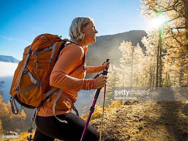 hiker ascends through forest of alpine larch - pantaloni foto e immagini stock