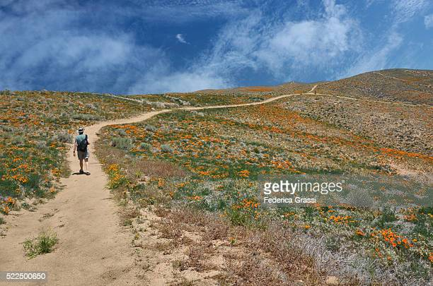 Hiker At Antelope Valley California Golden Poppy Reserve, Lancaster, CA