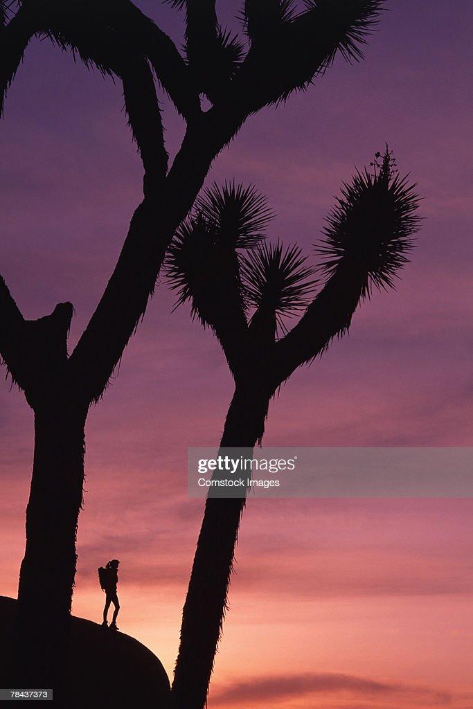 Hiker at Joshua Tree National Park : Stockfoto
