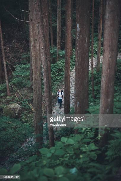 Hiker between Nakasendo Trail Trees