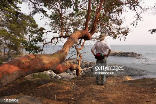 Hiker Coast Trail Arbutus tree East Sooke Regional Park Vancouver Island British Columbia