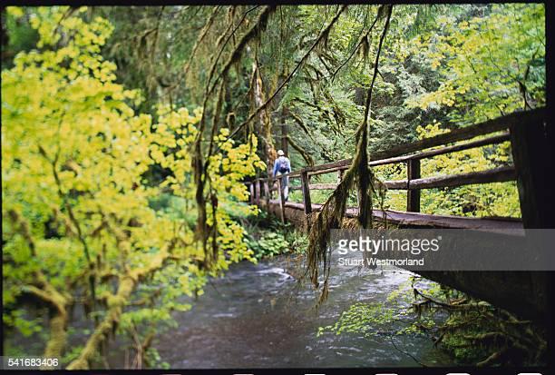 Hiker Crossing Log Bridge Above Sol Duc River