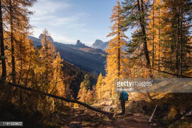 hiker enjoying dolomites in autumn, veneto, italy - european alps stock pictures, royalty-free photos & images