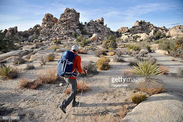 hiker exploring mojave desert, joshua tree national park, california - joshua tree stock photos and pictures
