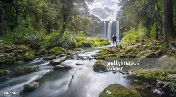 hiker facing whangarei waterfall, temperate rainforest, whangarei, northland, north island, new zealand - whangarei heads stock-fotos und bilder