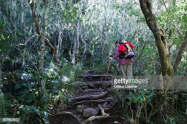 Hiker in forest, Cirque de Cilaos, La Réunion