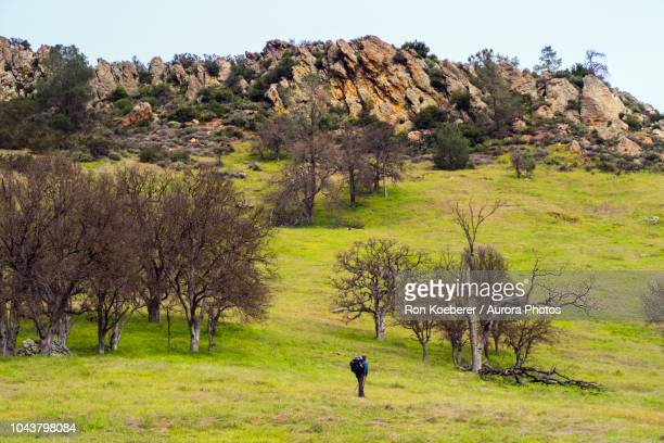 hiker in scenery with rocks, meadow and trees in henry w. coe state park - koeberer stock photos and pictures