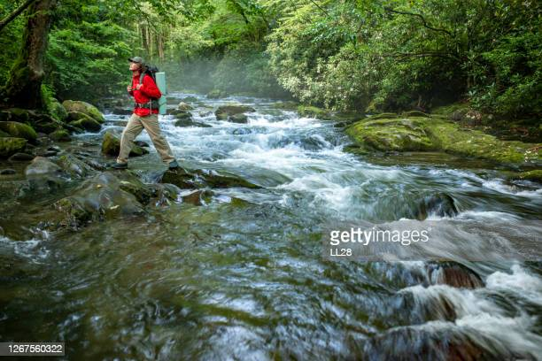 hiker in the great smoky mountains national park - great smoky mountains stock pictures, royalty-free photos & images