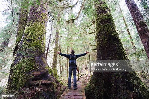 a hiker in the old growth forest at carmanah walbran provincial park, vancouver island, british columbia, canada, north america - carmanah walbran provincial park stock pictures, royalty-free photos & images