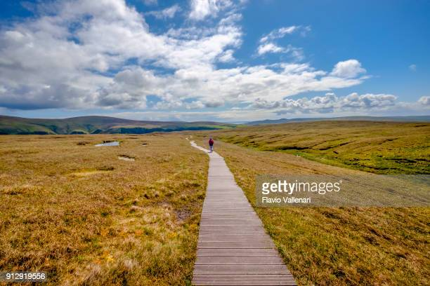 hiker in the vast prairie that leads to the impressive cliffs of the hermaness national nature reserve, the britain's most northerly point located on unst, shetland islands, scotland. - nature reserve stock pictures, royalty-free photos & images