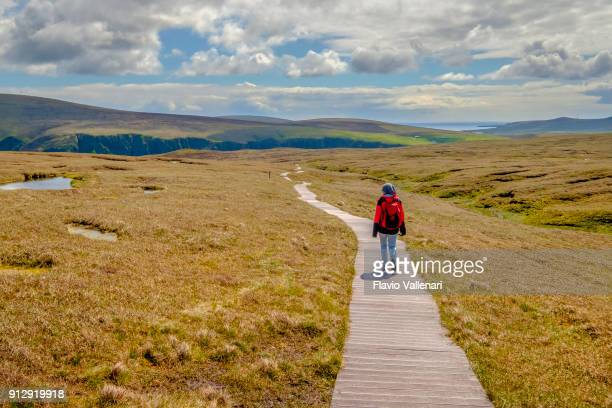 hiker in the vast prairie that leads to the impressive cliffs of the hermaness national nature reserve, the britain's most northerly point located on unst, shetland islands, scotland. - isole shetland foto e immagini stock