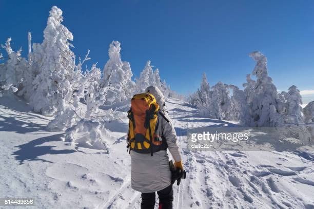 Hiker in winter landscape with snow-covered trees, Great Arber, Bavarian Forest , Bavaria, Germany