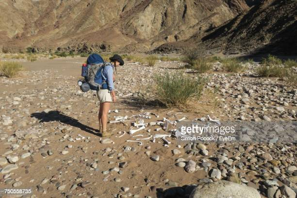 hiker looking at animal skeletons while standing on dirt road - animal bones stock photos and pictures