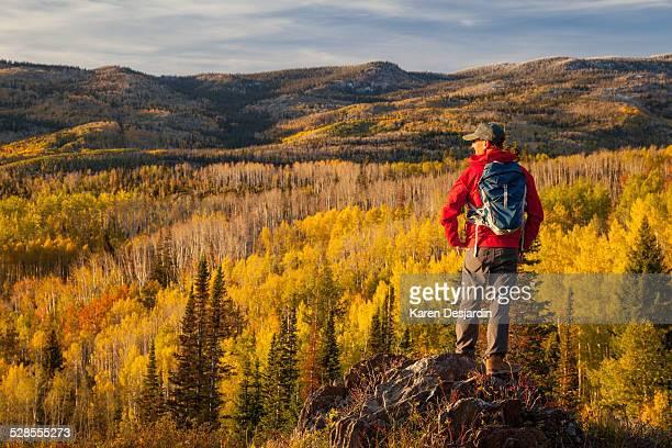 hiker looking over view of fall colored aspens - steamboat springs colorado - fotografias e filmes do acervo