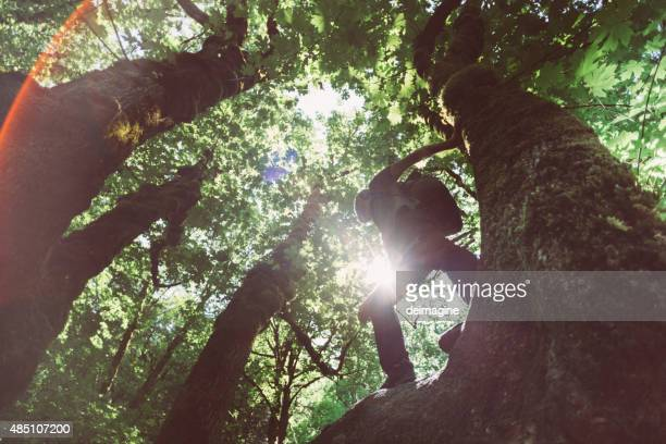 hiker man with backpacking explores the forest - sequoia tree stock pictures, royalty-free photos & images