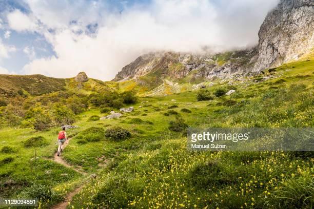 hiker near fuente de in national reserve parque national de los picos de europa, potes, cantabria, spain - cantabria fotografías e imágenes de stock