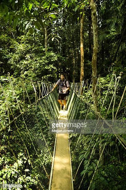 hiker on canopy walkway - taman negara national park stock photos and pictures