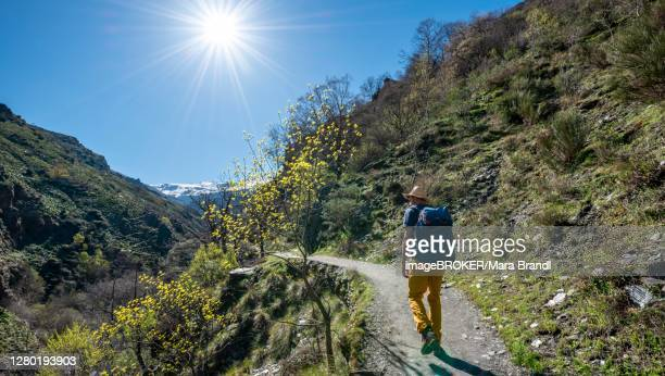 hiker on hiking trail vereda de la estrella, behind sierra nevada with summits mulhacen and la alcazaba, snow-covered mountains near granada, andalusia, spain - granada provincia de granada stock pictures, royalty-free photos & images