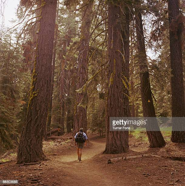 Hiker on Lakes Trail , Sequoia National Park , California