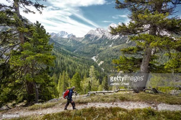 hiker on path looking at mountain range through trees, dolomites, italy - turismo ecológico fotografías e imágenes de stock