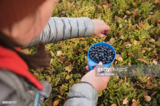 hiker picking wild blueberries outside trnasjs hut, kungsleden trail, lapland, sweden - norrbotten province stock pictures, royalty-free photos & images