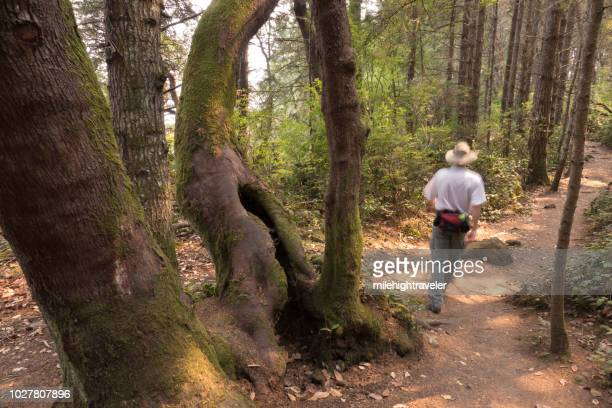 Hiker rainforest Coast Trail East Sooke Regional Park Vancouver Island British Columbia