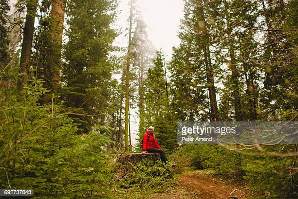 hiker resting on tree stump, sequoia national park, california, usa - tree stump stock pictures, royalty-free photos & images