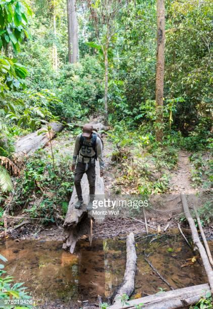 hiker standing on a tree trunk in the jungle, kuala tahan, taman negara, malaysia - taman negara national park stock photos and pictures