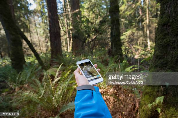 Hiker using compass on smart phone in forest