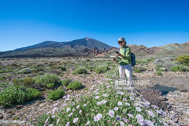 hiker using sat nav in teide np, tenerife - uncultivated stock pictures, royalty-free photos & images