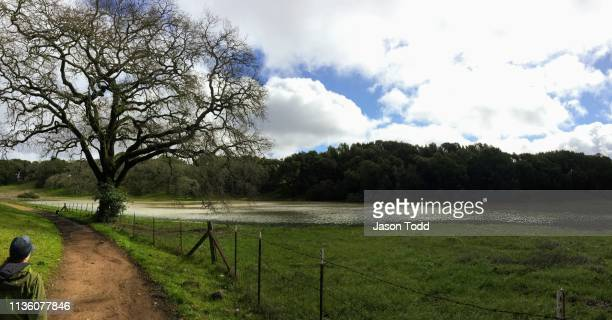 hiker walking along the mount burdell preserve past hidden lake, seasonal pond - jason todd stock photos and pictures