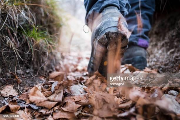 Wandelaar wandelen op bospad
