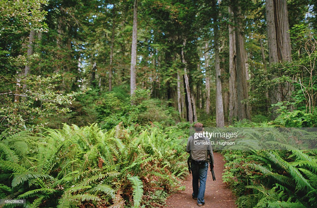 Hiker Walking Through Giant Ferns : Stock Photo