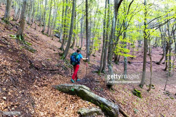 hiker walks on a path in the forest. - italia stock-fotos und bilder