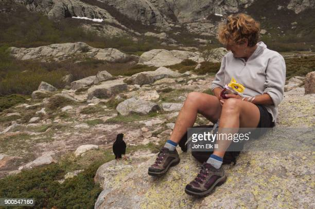 hiker with blackbird - merel stockfoto's en -beelden
