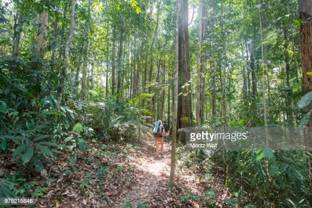 hiker, young woman walking along a trail in the jungle, kuala tahan, taman negara national park, malaysia - taman negara national park stock photos and pictures