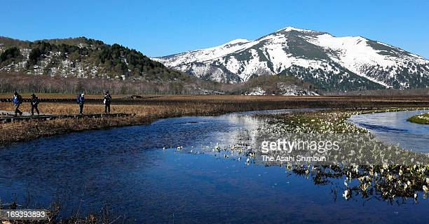 Hikers enjoy Oze Marshland on May 23 2013 in Katashina Gunma Japan The area popular desitination for hikers is open until the end of October