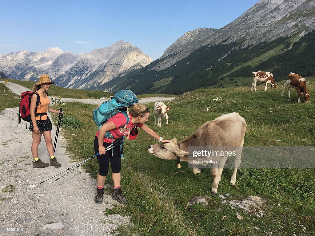 Hikers, family members of the photographer, on day two of a four-day, 50km hike across the Karwendel mountain range greet a herd of cows near the Karwendelhaus hut on August 8, 2015 near Herrenhaeuser, Austria. The Karwendel mountain range, part of the Austrian Alps, is located in central Tyrol and is a popular summer destination for mountain bikers, climbers and hikers. Mountain huts operated by alpine clubs and scattered across the region offer food and shelter.